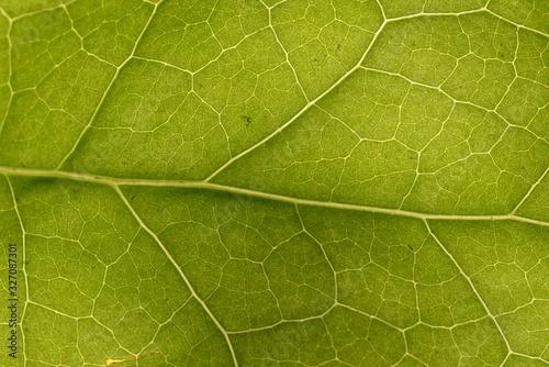 leaf Slika na platnu