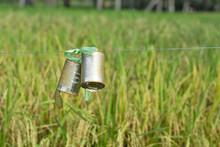 Bird Repellent Cab In The Rice...