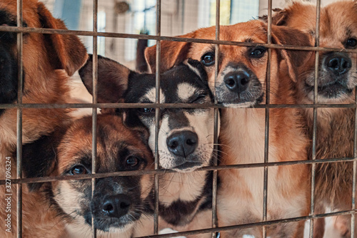 Fotografia Unwanted and homeless dogs of different breeds in animal shelter