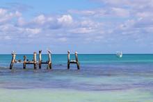 Brown Pelicans And Sea Birds O...