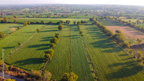 Ariel top view of agriculture field Canvas-taulu