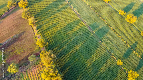 Ariel top view of agriculture field Wallpaper Mural