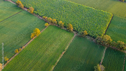 Ariel top view of agriculture field Canvas Print