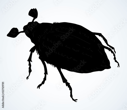 Photo Chafer. Vector drawing of a big beetle