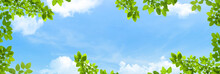 Uprisen Angle View Of Green Leaves With White Clouds And Blue Sky In Background.