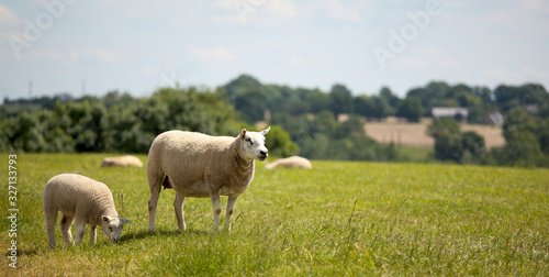 Foto Troupeau de mouton en plein air en campagne.