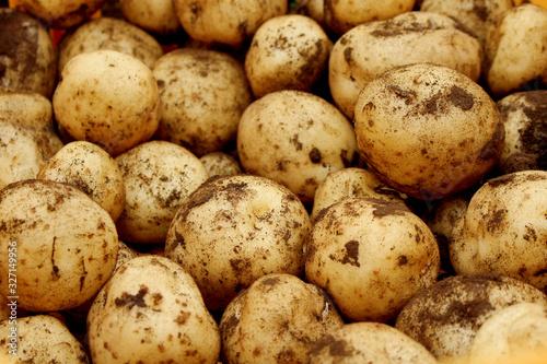 Fotomural じゃがいも Potatoes