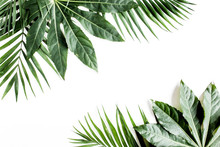 Tropical Palm Leaves Aralia Is...