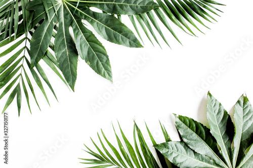 Fototapeta Tropical palm leaves Aralia isolated on white background. Tropical nature concept. obraz na płótnie
