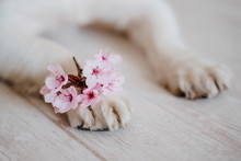 Close Up View Of Dog Paws With...