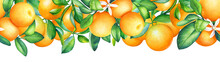 Watercolor Illustration Of Blooming Orange Tree Branches. Seamless Pattern