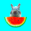 canvas print picture Contemporary art collage. Funny bunny and watermelon piece
