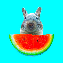 Contemporary Art Collage. Funny Bunny And Watermelon Piece