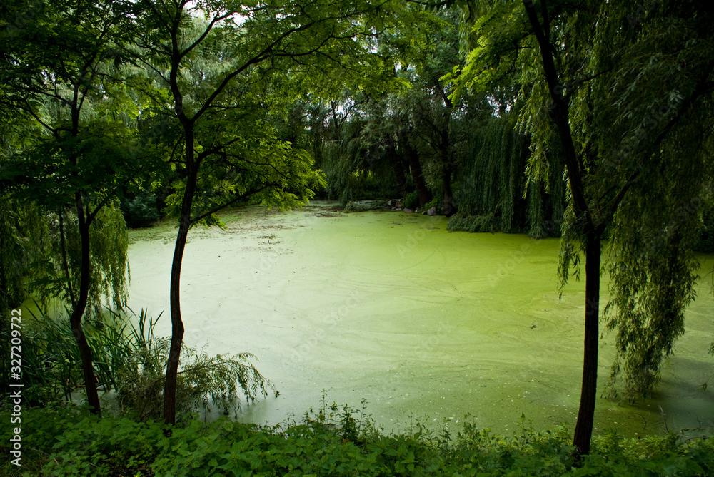 Fototapeta Basniowy tajemniczy zielony staw w srodku lasu