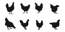 Silhouettes Of Hen Chicken. Ve...