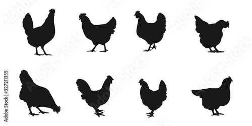 silhouettes of hen chicken. vector Illustration Canvas Print