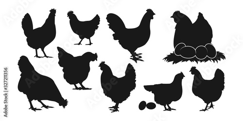 silhouettes of hen chicken Canvas Print