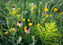 Coneflower, Prairie Clover And Coreopsis Blooming In The Summer Prairie.