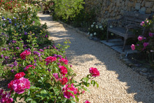 Flowers Bordering Garden Path,...