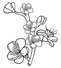 Hand Drawn Botanical Doodle Of Apple, Sakura, Cherry And Plum Blossom.