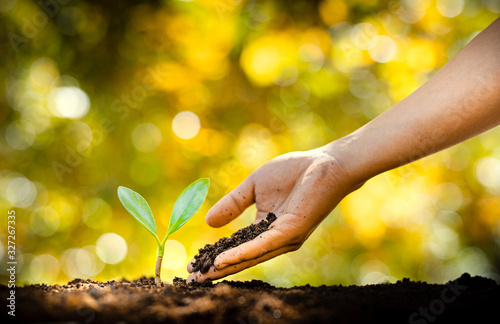 Fotografía Planting trees - hands giving soil to trees, growing trees in a row and golden
