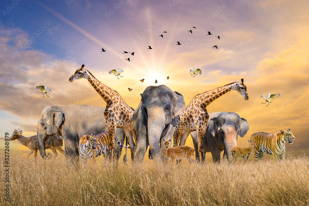 Fototapeta Large group of african safari animals. Wildlife conservation concept