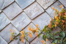 Orange Trumpet Vine Flowers Against A Slate Tile Wall