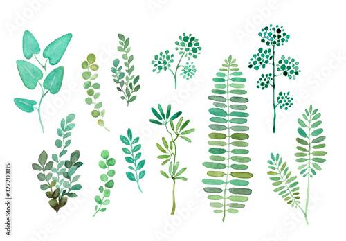 Foto 水彩 葉っぱ 植物 グリーン ナチュラル イラスト