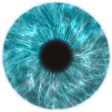Human Eye Iris