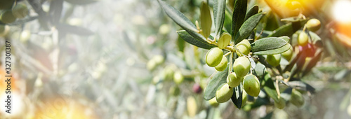 Nature background with olives Wallpaper Mural
