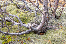 Thick Moss Growing Under Tree ...
