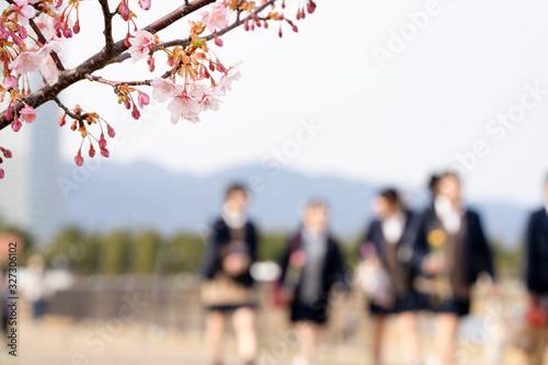 桜と高校生 Canvas Print