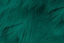 Beautiful Dark Green Viridian ...
