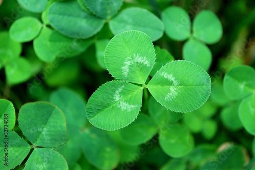 Obraz Closeup Vibrant Green Shamrock Leaf with Blurry Foliage in Background - fototapety do salonu