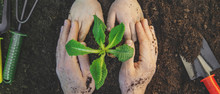 Gardening, Planting Plants In ...