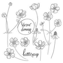 Buttercups. Flowering Wildflow...