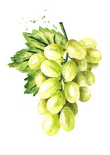 Green Sultana Grape With Green Leaf. Hand Drawn Watercolor Horizontal  Illustration Isolated On White Background