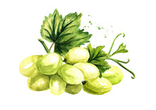 Green Sultana Grapes With Green Leaf, Hand Drawn Watercolor Horizontal  Illustration Isolated On White Background