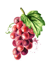 Red Grape With Green Leaf. Han...