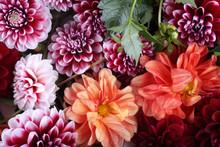 Dahlia Flowers Background. Different Dahlia Varieties - Orange, Red And Bicolor