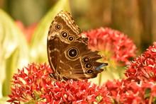 Beautiful Colorful Nature Wild...