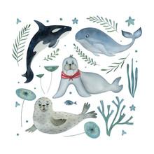 Watercolor Set Of Sea Animals ...