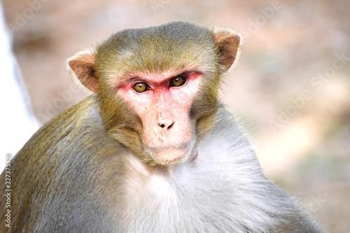 Photo A Monkey