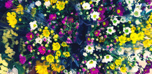 Bouquet Of Colorful Flower In Plastic Bag For Sale At Floral Shop In Blue Vintage Tone Filter. Fresh Plant Or Natural Wallpaper Concept. Beauty In Nature