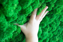 Child Touches Green Moss With ...