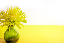 A Fresh, Yellow-green Spider M...