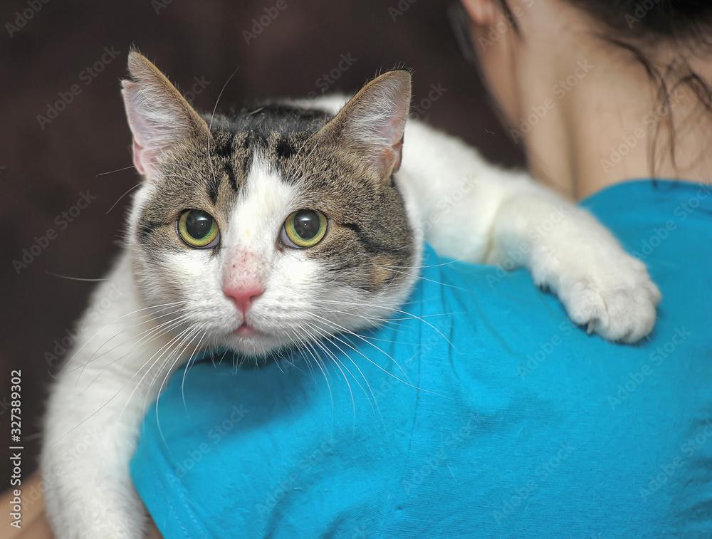Obraz large white with gray cat on the shoulder fototapeta, plakat