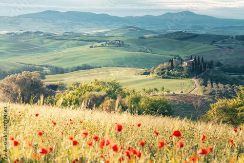Fototapeta Poppy flowers and meadow in springtime, rolling hills on background. Tuscany obraz na płótnie