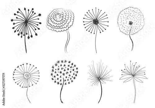 Fototapeta Doodle fluffy dandelions.  obraz