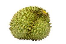 Durian On White Background. Ki...